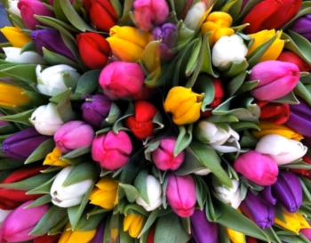 18a_tulips.png
