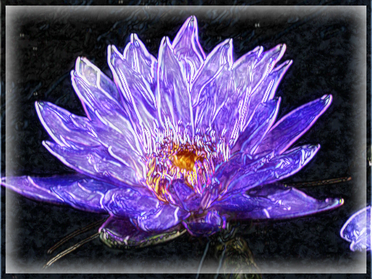 19_waterlily.png
